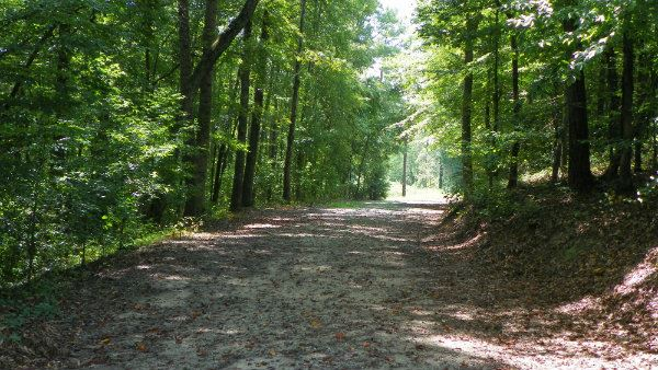 Road through Linwood Nature Preserve