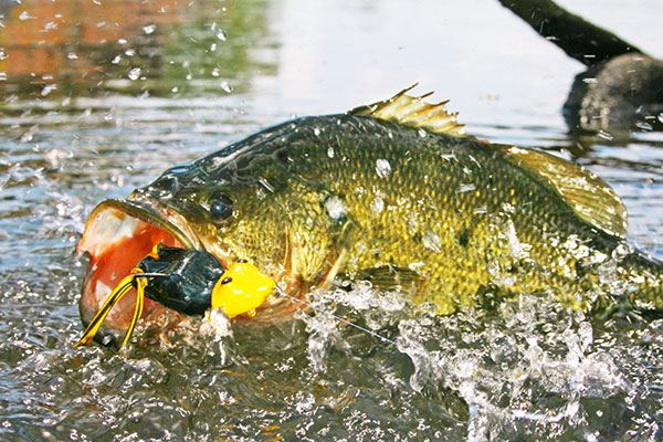 Image of a fish being caught.